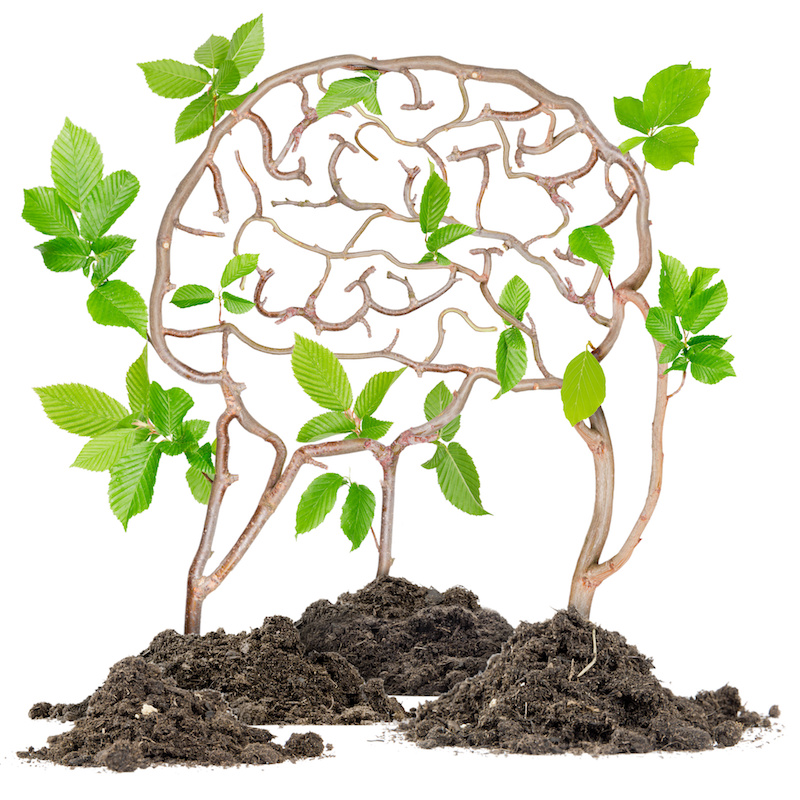 Illustration of a healthy brain growing as a plant