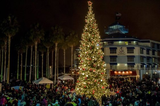 photo of holiday tree lit up in Jack London Square in Oakland